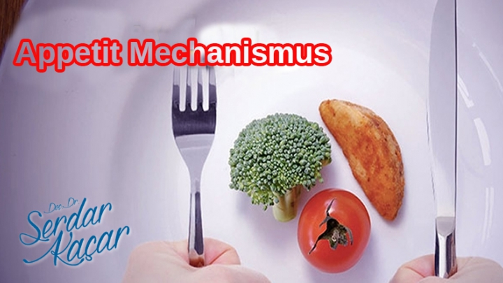 Wie funktioniert der Appetit Mechanismus